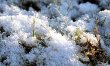 京都の本社に、初雪が降りました